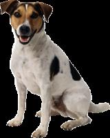 dog_PNG2405
