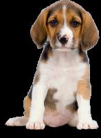 dog_PNG2414