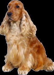 dog_PNG50397