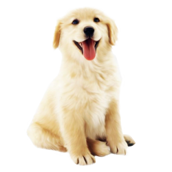 dog_white