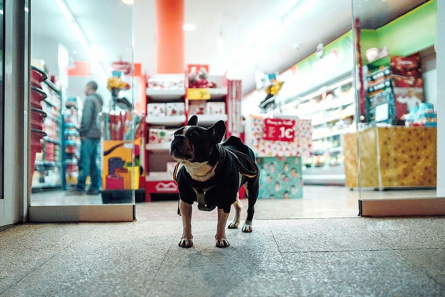 mercato pet food